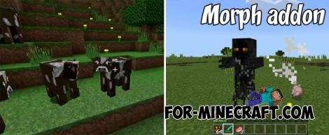 Morph addon for Minecraft Bedrock 1.2